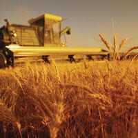 ВТО и сельское хозяйство: продовольствие для жизни или прибыли? Перевод с немецкого.