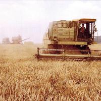 Сельское хозяйство в ВТО: Закрепление контроля корпораций
