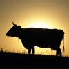 «Золотой миллиард» и «дойная корова» по имени «Россия»